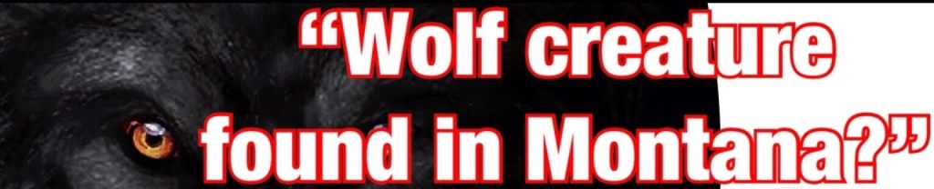Wolf Creature Found In Montana