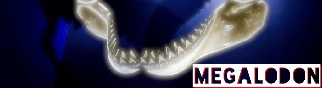 Ever Heard Of The Megalodon