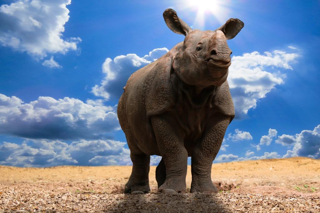 giant rhino found in china,