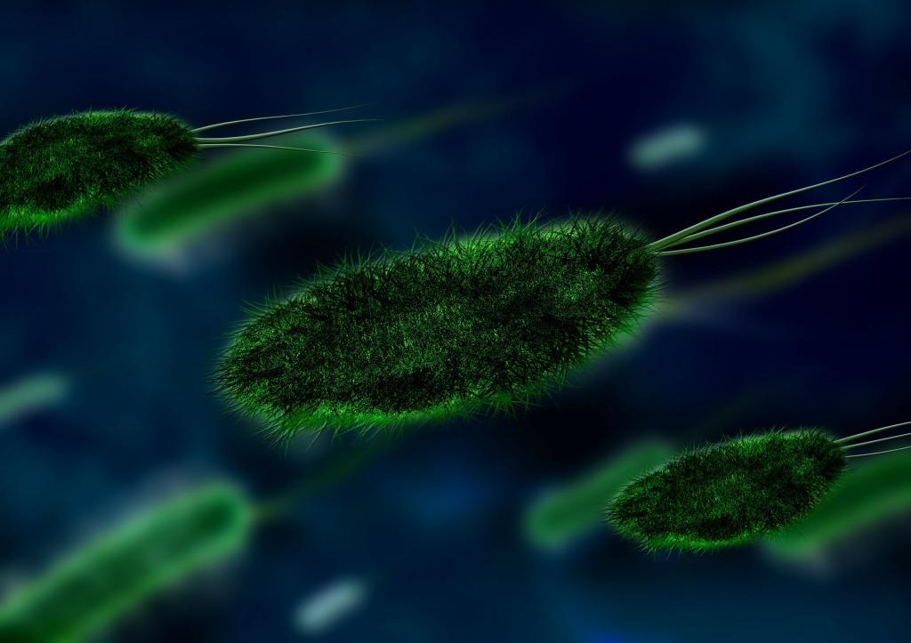 ancient bacteria
