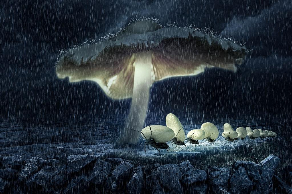 zombie ants mushroom fungus