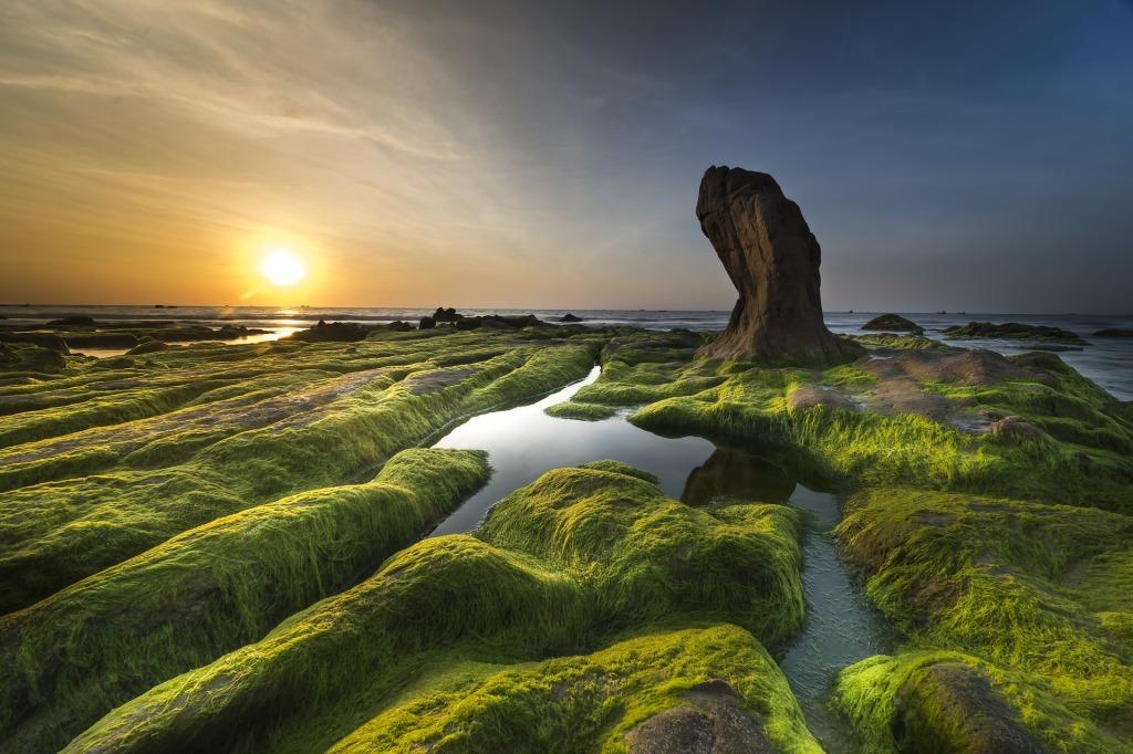 Algae on the coast