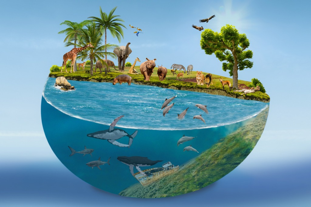 wildlife in the world