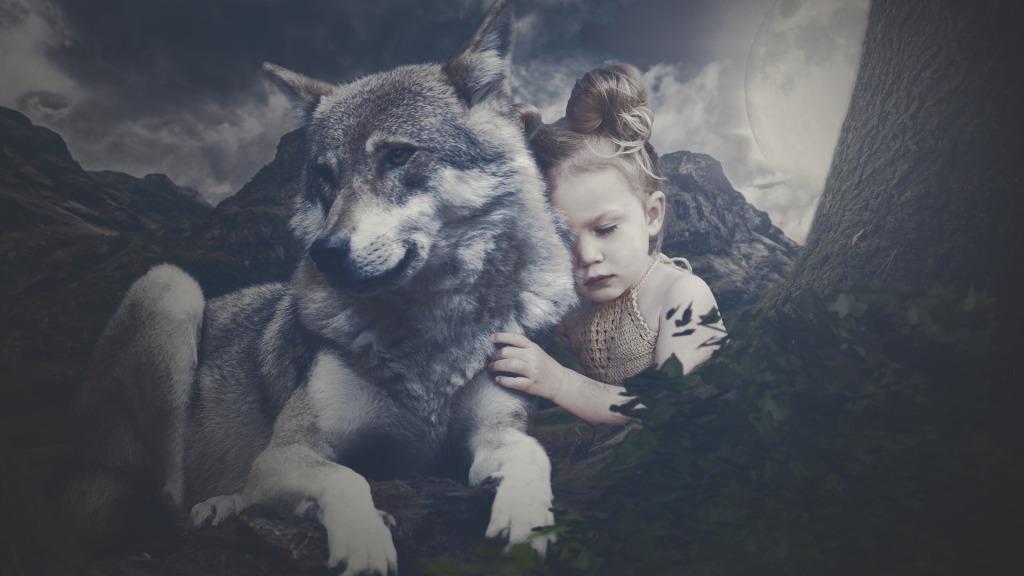 wolf behavior