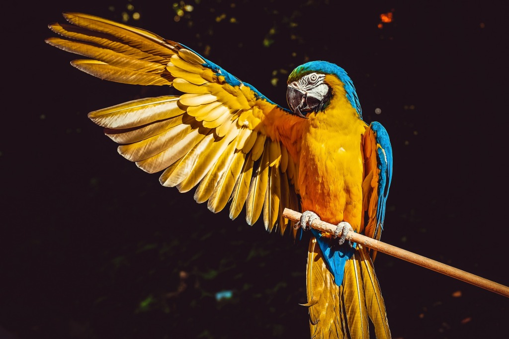 yellow macaw parrot